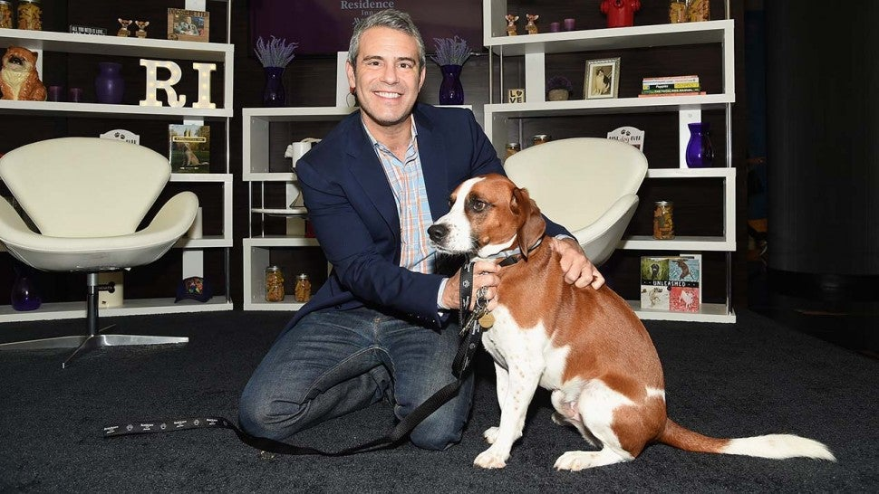 "Andy Cohen posa con su perro Wacha en el evento de adopción ""Dog Days Of Summer"" de Residence Inn by Marriott y North Shore Animal League America el 10 de agosto de 2017 en la ciudad de Nueva York."